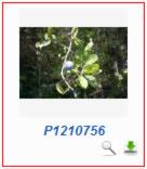 Phoca Gallery Parameters - Border Color