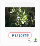 Phoca Gallery Parameters - Display Name