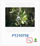 Phoca Gallery Parameters - Display Detail Icon