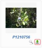 Phoca Gallery Parameters - Display Download Icon