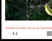 Phoca Gallery Parameters - Font Color of Description