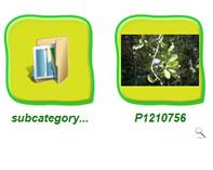 Phoca Gallery Parameters - Image Background Shadow