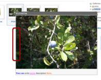 Phoca Gallery Parameters - Overlib Border Color