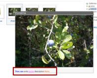 Phoca Gallery Parameters - Overlib Caption Font Color